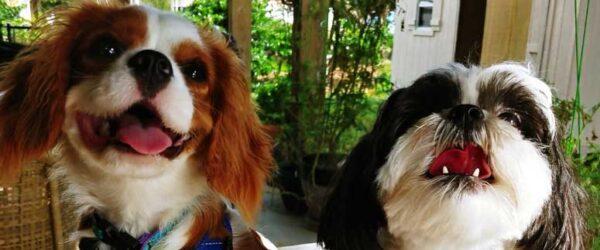Gracie and Bentley
